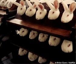 rabbit-cosmetic-test.jpg